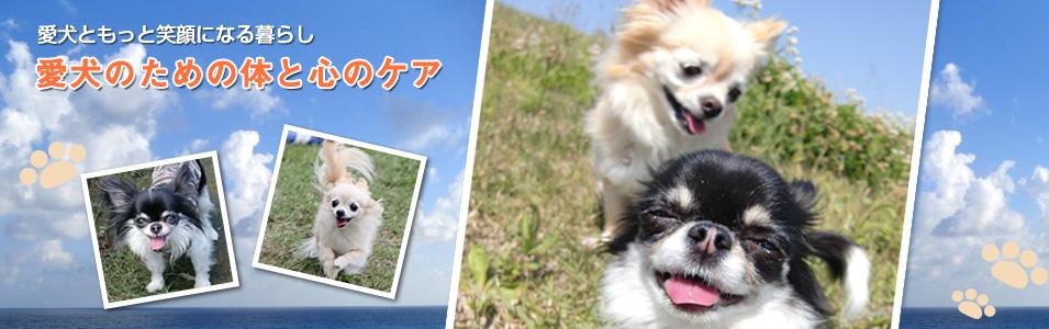 愛犬ともっと笑顔になる暮らしトータルドッグケア ぱれっと